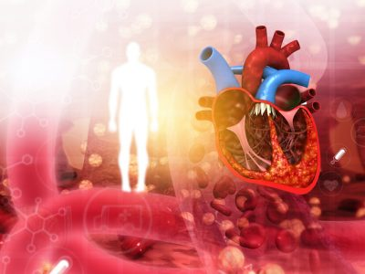 Cross section of human heart on abstract medical background. 3d illustration